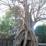 Angkor Vat - Ta Som
