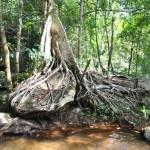 Alentour Angkor Vat - Kbal Spean