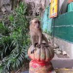 Le retour des singes...